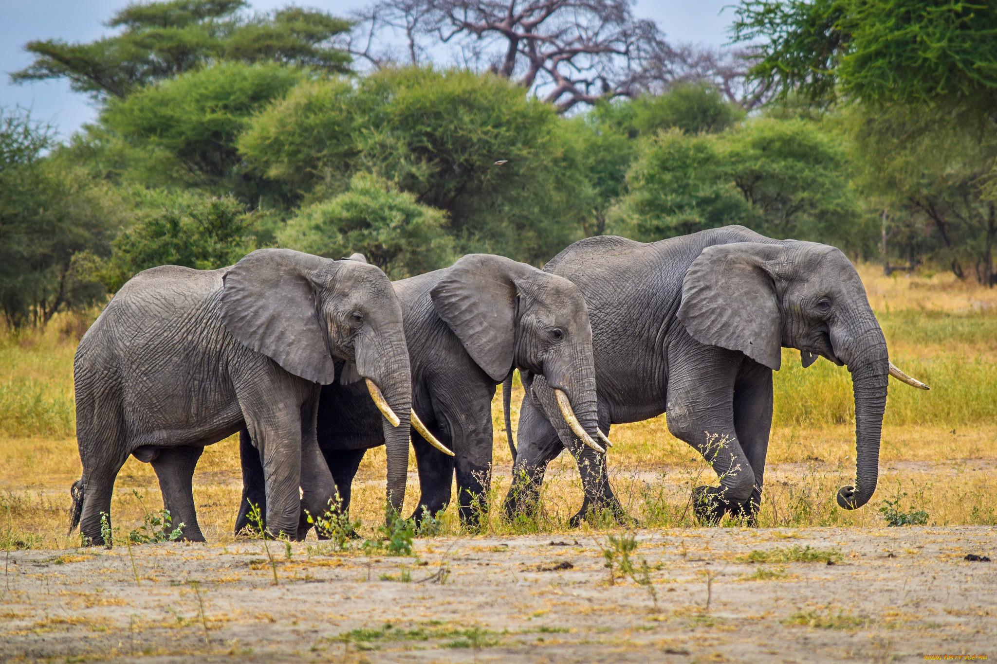 смотреть картинки со слонами сайдингового фасада деревенском